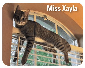 Cute cat balancing and hanging off a window pane